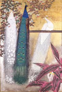 tanaka02